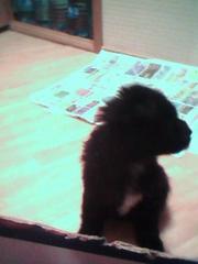 собачка 4 месяца девочка ишет добрых и заботливых хозяев